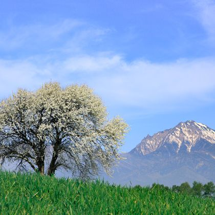 Natural landscape, Sky, Tree, Nature, Grassland, Green, Blue, Cloud, Grass, Pasture,