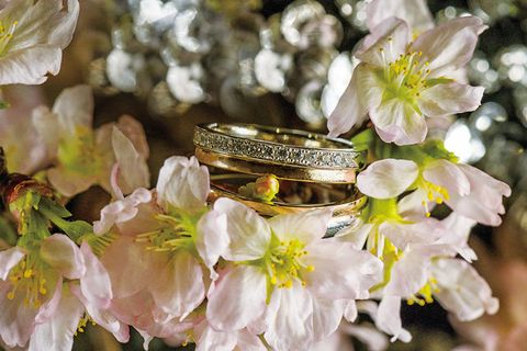 Petal, Flower, Botany, Jewellery, Spring, Blossom, Close-up, Photography, Macro photography, Ring,