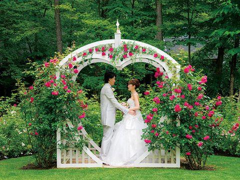 Petal, Plant, Dress, Bridal clothing, Flower, Photograph, Garden, Happy, Wedding dress, Pink,