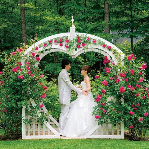 Petal, Plant, Dress, Bridal clothing, Photograph, Flower, Garden, Wedding dress, Bride, Pink,