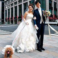 Clothing, Dog breed, Dress, Coat, Bridal clothing, Window, Trousers, Dog, Carnivore, Textile,