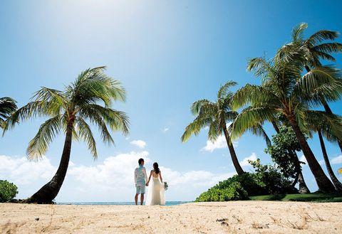 Photograph, Tree, Palm tree, Sky, Arecales, Vacation, Beach, Date palm, Sand, Tropics,