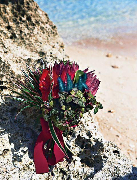 Flower, Plant, Wildflower, Landscape, Vacation, Rock,