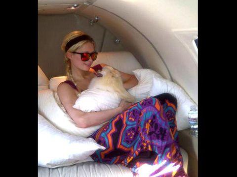 Comfort, Carnivore, Dog, Dog breed, Companion dog, Canidae, Toy dog, Sleep, Nap, Love,