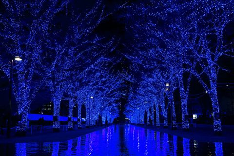 Blue, Nature, Water, Tree, Light, Lighting, Majorelle blue, Electric blue, Purple, Night,