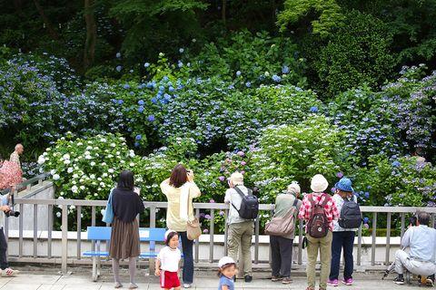 Tree, Spring, Botany, Garden, Public space, Plant, Leisure, Flower, Shrub, Park,