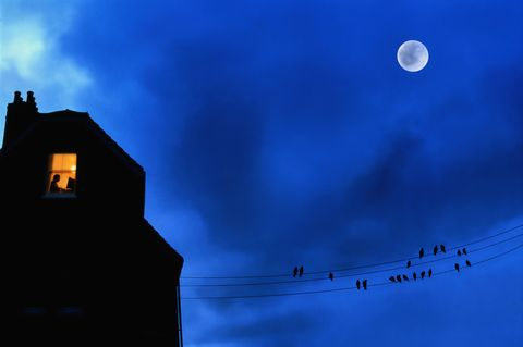 Nature, Blue, Sky, Daytime, Atmosphere, Astronomical object, Light, Celestial event, Bird, Atmospheric phenomenon,