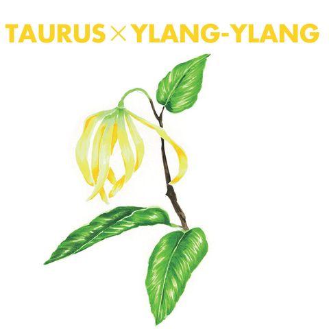 Leaf, Botany, Plant stem, Illustration, Perennial plant, Herbaceous plant, Graphics, Bud, Pedicel, Herb,