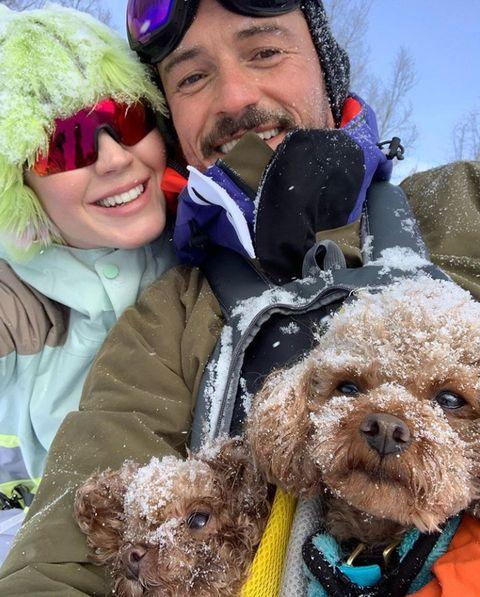 Dog breed, Dog, Carnivore, Winter, Glove, Costume accessory, Cool, Dog supply, Pet supply, Collar,