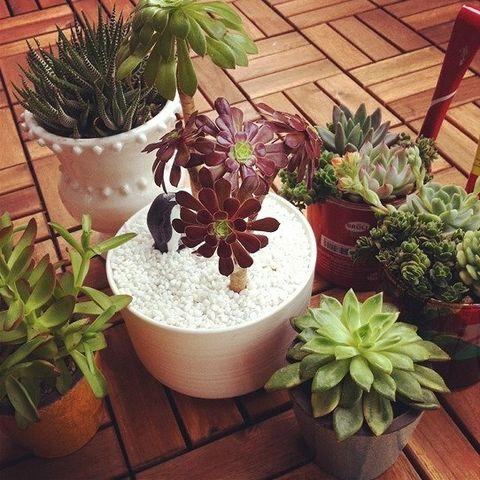 Flowerpot, Plant, Interior design, Terrestrial plant, Houseplant, Flowering plant, Succulent plant, Annual plant, Wood stain, Herb,