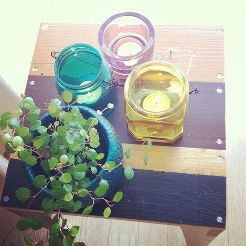 Grapevine family, Candle, Circle, Annual plant, Vitis, Grape, Box,