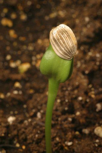 Natural environment, Leaf, Botany, Terrestrial plant, Soil, Plant stem, Close-up, Spring, Macro photography, Vascular plant,