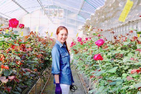 Flower, Jeans, Red, Petal, Pink, Garden, Greenhouse, Shrub, Denim, Botany,