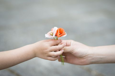 Finger, Petal, Flower, People in nature, Peach, Flowering plant, Nail, Insect, Rose family, Gesture,