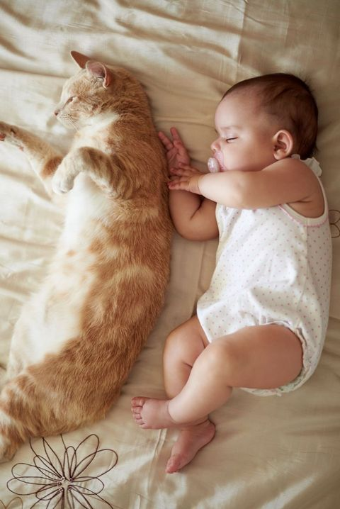 Human, Cheek, Comfort, Skin, Vertebrate, Small to medium-sized cats, Felidae, Cat, Carnivore, Mammal,