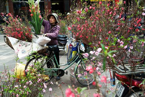 Flower, Spring, Plant, Botany, Vehicle, Tree, Blossom, Shrub, Bicycle, Leisure,