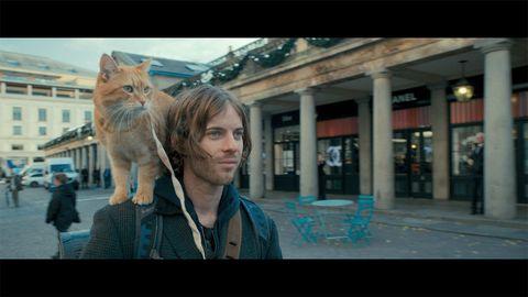Cat, Photograph, Felidae, Snapshot, Fur, Small to medium-sized cats, Human, Photography, Eye, Blond,