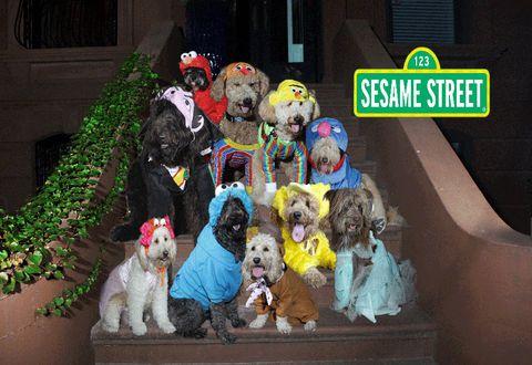 Dog breed, Dog, Carnivore, Sporting Group, Dog supply, Logo, Companion dog, Toy dog, Canidae, Pet supply,