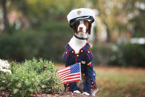 Dog clothes, Carnivore, Dog, Collar, Dog supply, Flag of the united states, Dog breed, Costume accessory, Dog collar, Companion dog,