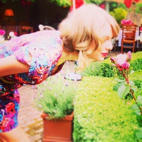 Petal, Pink, Magenta, Garden, Shrub, Balloon, Costume, Wig, Annual plant, Floristry,