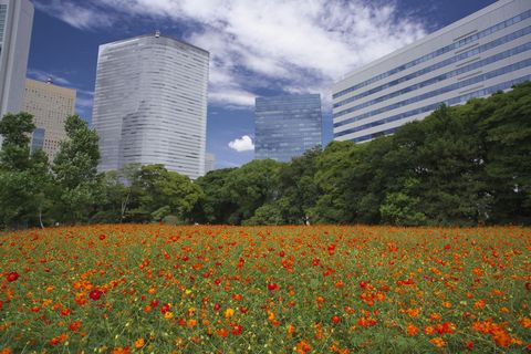 Nature, Natural landscape, Sky, Meadow, Flower, Wildflower, Daytime, Natural environment, Vegetation, Plant,