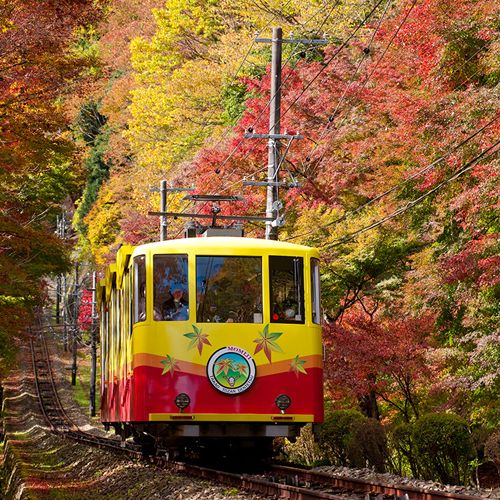 Transport, Mode of transport, Vehicle, Nature, Rolling stock, Leaf, Tree, Motor vehicle, Autumn, Tram,