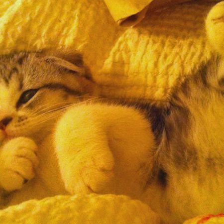 Yellow, Vertebrate, Small to medium-sized cats, Cat, Comfort, Carnivore, Felidae, Whiskers, Amber, Fur,
