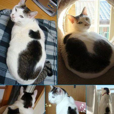 Organism, Vertebrate, Carnivore, Felidae, Cat, Small to medium-sized cats, Whiskers, Iris, Snout, Fur,