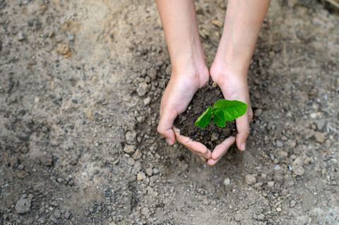 Human, Soil, Leaf, Terrestrial plant, Nail, Produce, Annual plant, Compost, Gardening, Toe,