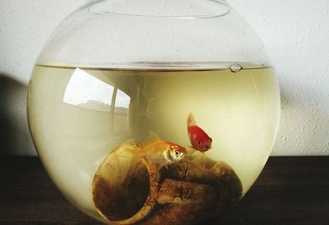 Glass, Goldfish, Artifact, Still life photography, Egg,