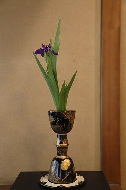 Flower, Flowerpot, Vase, Flowering plant, Terrestrial plant, Artifact, Plant stem, Houseplant, Still life photography, Perennial plant,