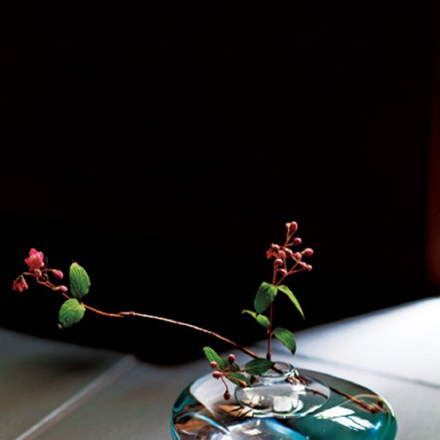 Green, Glass, Teal, Still life photography, Turquoise, Aqua, Artificial flower, Transparent material, Reflection, Plant stem,