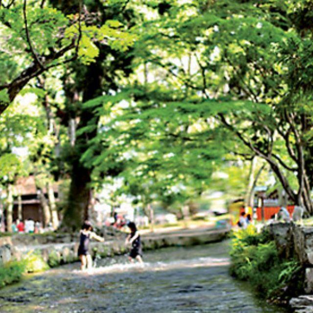 Nature, Tree, Vegetation, Woody plant, Leaf, Plant, Branch, River, Road, Street,
