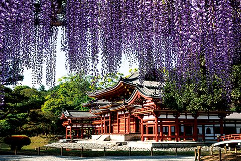 Chinese architecture, Architecture, Japanese architecture, Tree, Building, Temple, Spring, Sky, Plant, Place of worship,