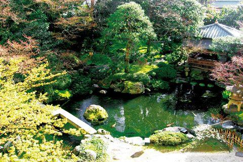 Nature, Vegetation, Natural landscape, Water resources, Landscape, Pond, Garden, Botany, Watercourse, Shrub,