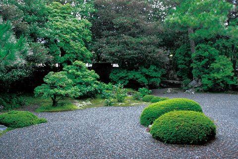Vegetation, Grass, Plant, Green, Shrub, Natural landscape, Landscape, Garden, Leaf, Groundcover,