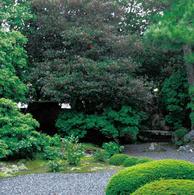 Vegetation, Plant, Shrub, Leaf, Garden, Tree, Landscape, Groundcover, Botany, Hedge,