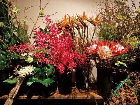 Flower, Petal, Botany, Floristry, Flowering plant, Flower Arranging, Twig, Annual plant, Flowerpot, Floral design,