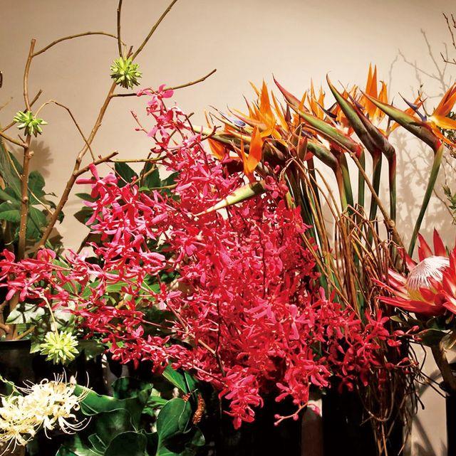 Flower, Red, Petal, Botany, Floristry, Carmine, Flower Arranging, Flowering plant, Artificial flower, Annual plant,