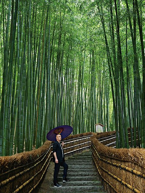 Human, Human body, People in nature, Forest, Bridge, Terrestrial plant, Grove, Biome, Bamboo, Woodland,