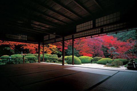 Tints and shades, Beam, Garden, Landscaping, Walkway, Deciduous, Botanical garden,