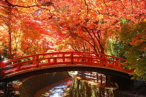 Nature, Bridge, Deciduous, Leaf, Red, Tree, Landscape, Arch bridge, Autumn, Orange,