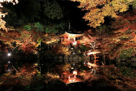 Nature, Night, Leaf, Chinese architecture, Deciduous, Botany, Japanese architecture, Temple, Shrine, Shinto shrine,