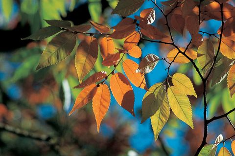 Leaf, Tree, Branch, Plant, Autumn, Twig, Woody plant, Flower, Sky, Deciduous,