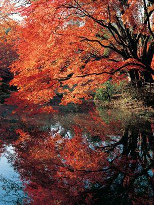 Nature, Vegetation, Deciduous, Branch, Leaf, Natural landscape, Red, Woody plant, Autumn, Orange,