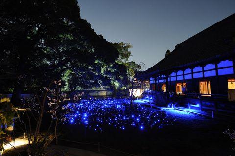 Majorelle blue, Evening, Garden, Landscape lighting, Dusk, Water feature,