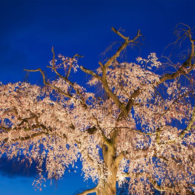 Branch, Nature, Blue, Twig, Night, Deciduous, Woody plant, Azure, Trunk, Electric blue,
