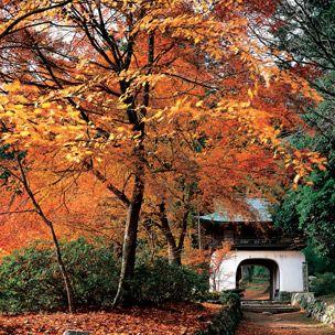 Deciduous, Nature, Branch, Leaf, Natural landscape, Autumn, Twig, Orange, Woody plant, Forest,