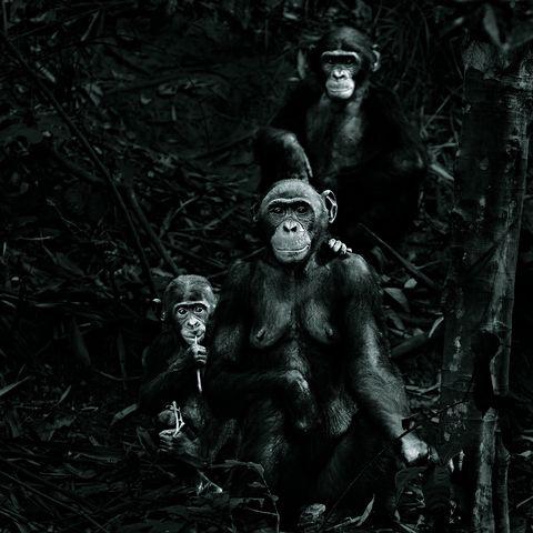 Organism, Primate, Vertebrate, Shoulder, Terrestrial animal, Snout, Nature reserve, Organ, Black, Muscle,