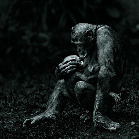 Black, Black-and-white, Darkness, Human, Monochrome, Organism, Tree, Photography, Adaptation, Art,